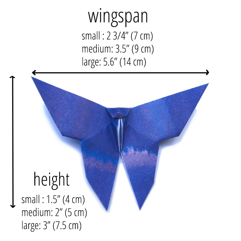 paper butterfly sizing info
